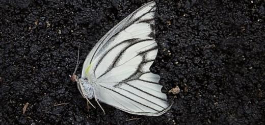 Il giardino delle farfalle - Dot Hutchison